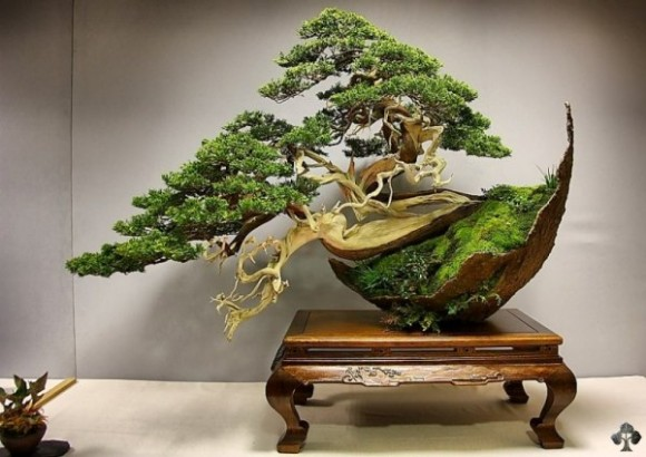 01-Juniper-bonsai-reyes