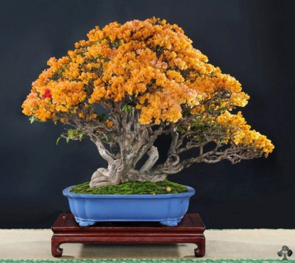 08-orange-bonsai