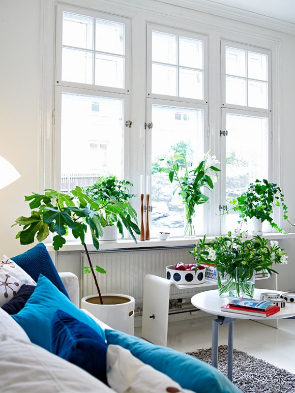 plants-in-home