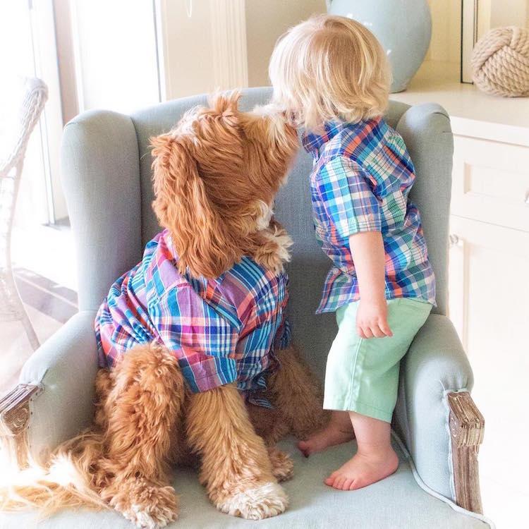 reagandoodle-dog-and-boy-10