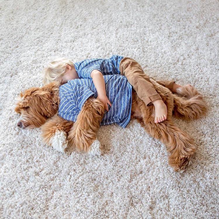 reagandoodle-dog-and-boy-11