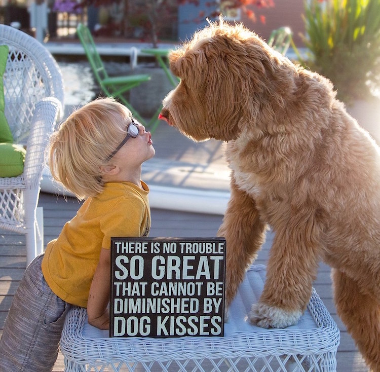 reagandoodle-dog-and-boy-2