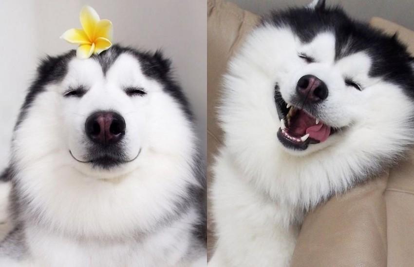 Дали е ова најсреќното куче на свет