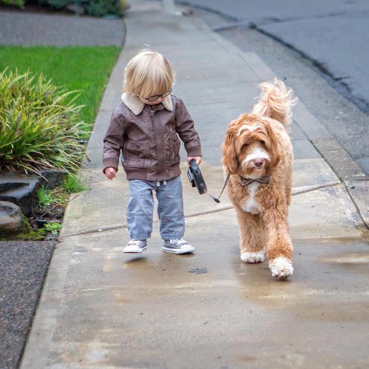 reagandoodle-dog-and-boy-4